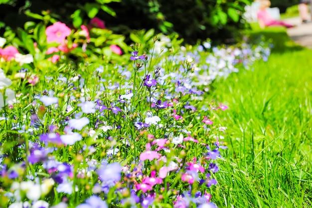 Kwiaty pałac carski sioło. petersburg