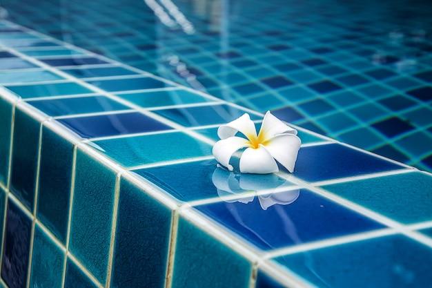 Kwiaty plumerii graniczą z basenem