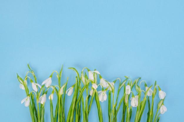 Kwiaty przebiśniegów na niebieskim tle, z miejsca na kopię
