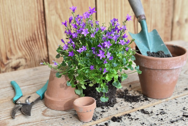 Kwiaty roślin i łopata w doniczce pełnej brudu do doniczkowania na drewnianym stole
