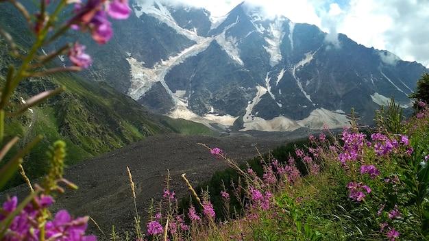Kwiaty rosną u podnóża gór