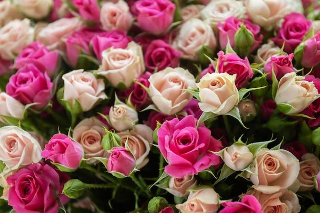 Kwiaty róże tło fioletowo beżowe