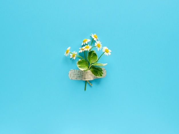 Kwiaty rumianku przymocowane łatą pomocy medycznej do niebieskiej ściany mięty. twórczy minimalistyczny układ leżał płasko, widok z góry z góry.