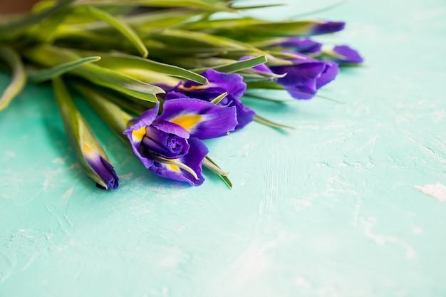 Kwiaty tęczówki