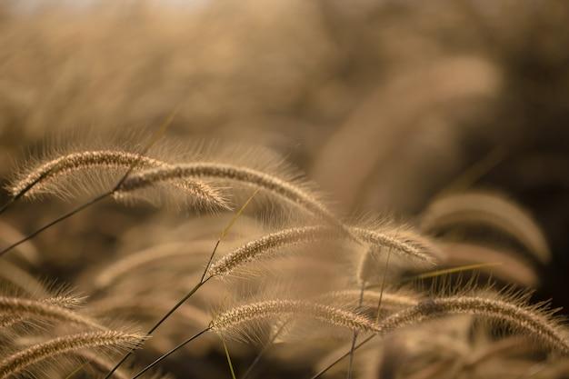 Kwiaty trawy wiejący wiatr, styl vintage