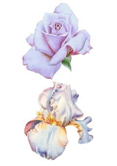 Kwiaty w akwarela. róża. irys. ilustracja. wyciągnąć rękę.