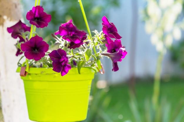 Kwiaty w doniczce w letnim ogrodzie