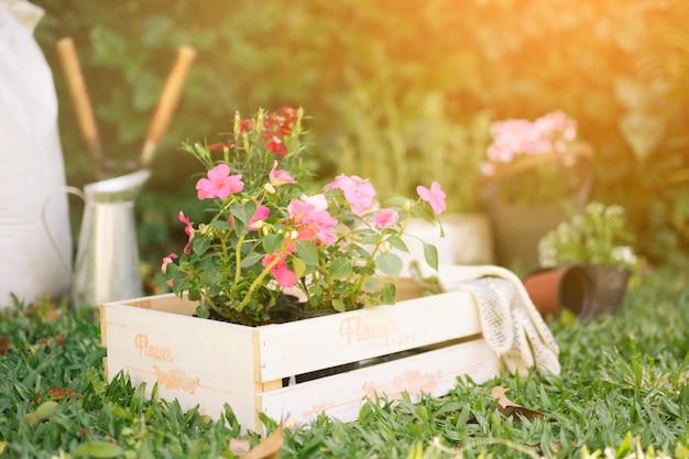Kwiaty w drewnianym pudełku na łące