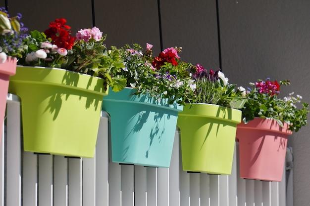 Kwiaty w kolorowych doniczkach na białym płocie