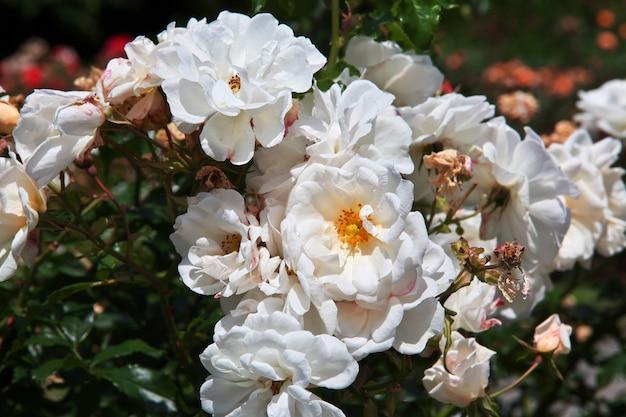 Kwiaty w ogrodzie botanicznym, christchurch, nowa zelandia
