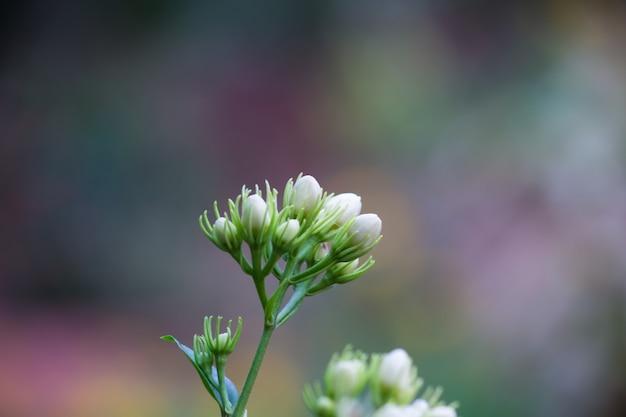 Kwiaty w pełnym rozkwicie w ogrodzie w jasny, słoneczny dzień
