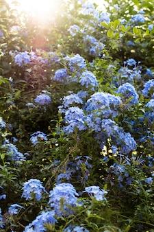 Kwiaty W Przydomowym Ogrodzie Darmowe Zdjęcia