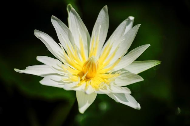 Kwiaty w stylu naturalnych ciemnych tonów.