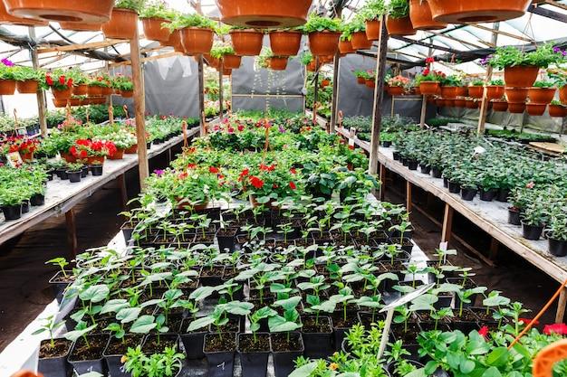 Kwiaty w szklarni w centrum ogrodniczym, zdjęcie szerokokątne
