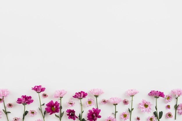 Kwiaty w tle przestrzeni kopii