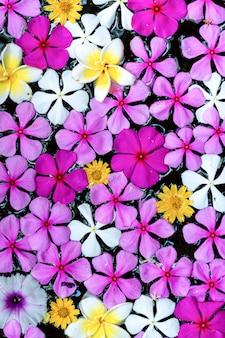 Kwiaty w wielu kolorach unoszące się w zbiorniku wodnym