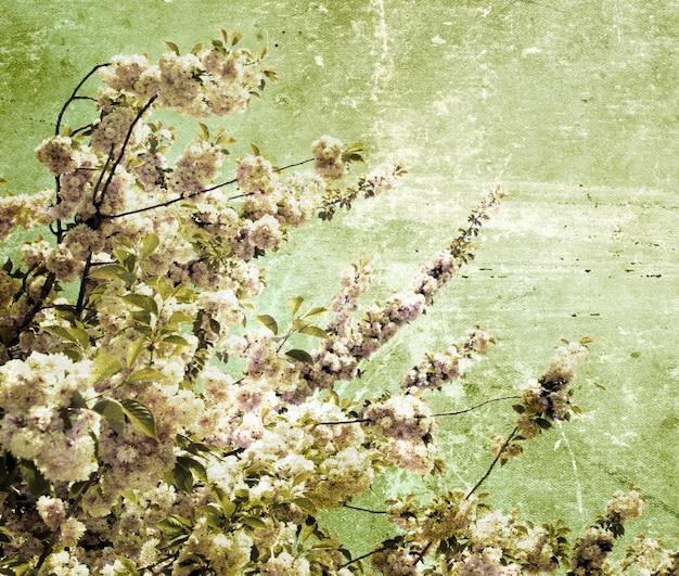 Kwiaty wiśni grunge