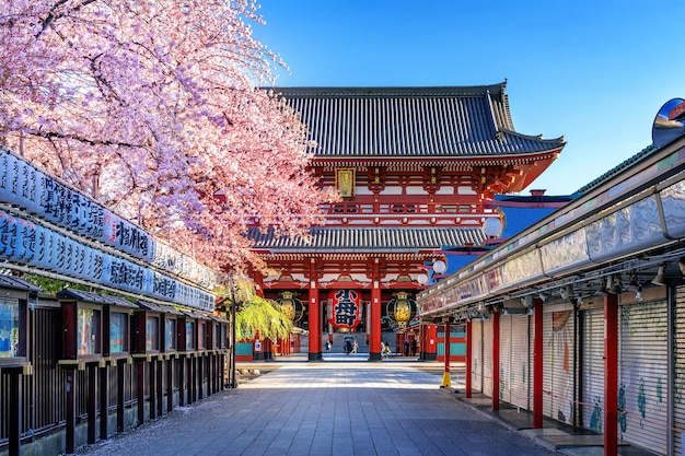 Kwiaty wiśni i świątynia sensoji w asakusa w tokio w japonii.