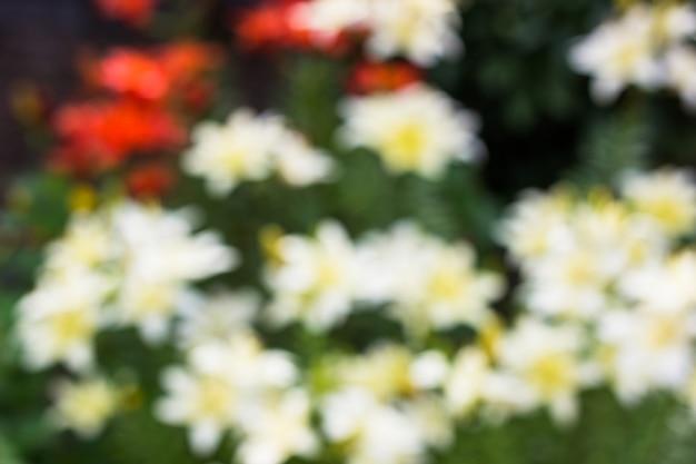 Kwiaty, zamazane ulice. miejsce dla tekstu, dla abstrakcyjnego tła. lato w tle. pływ