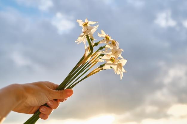 Kwiaty żonkili w ręku, kwiaty zaczynają blaknąć