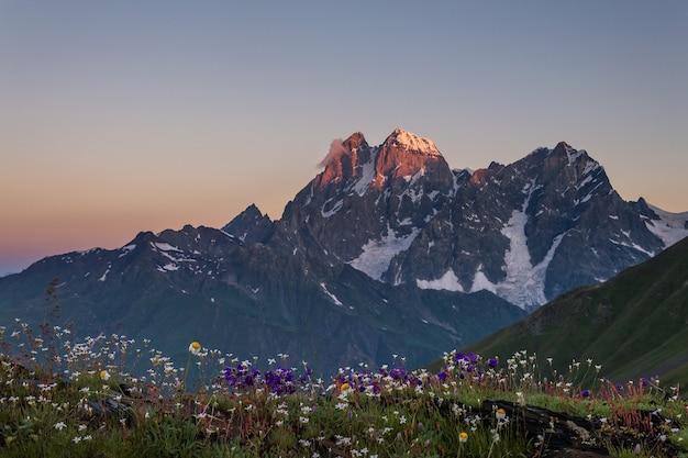 Kwiecista łąka i góra ushba o świcie