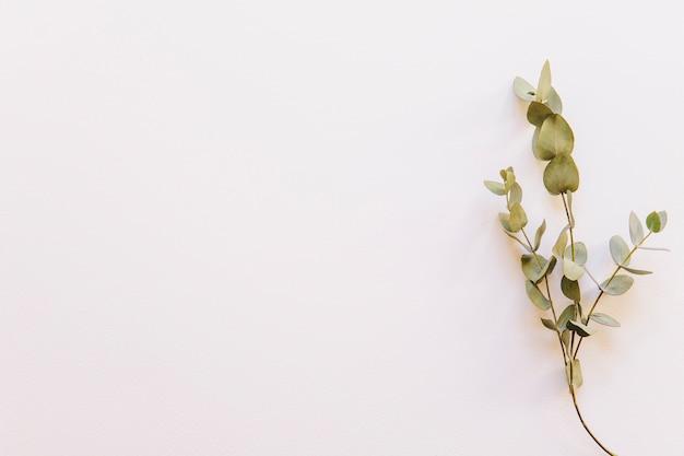 Kwiecisty tło z wildflower