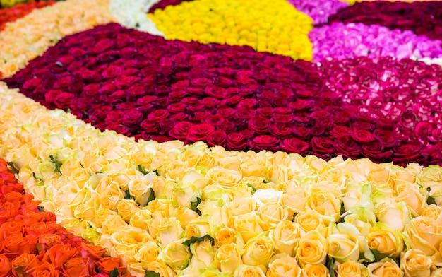 Kwietnik pełen różnych kolorowych róż