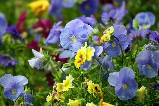 Kwietnik z różnymi kwiatami bratki