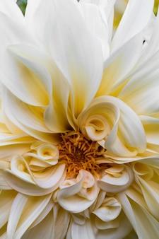 Kwitną białe kwiaty