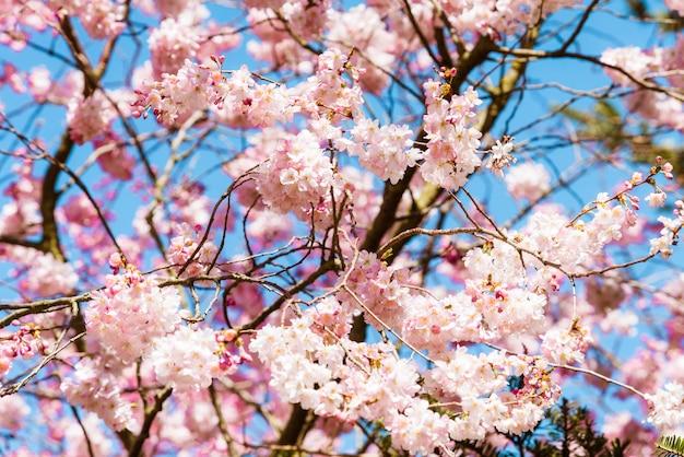 Kwitną wiosną, wiosenne kwiaty