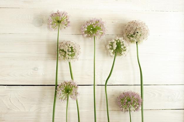 Kwitnąca cebula kulista z długimi łodygami stoi na tle drewnianej ściany