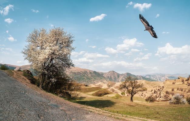 Kwitnąca dzika jabłoń w pobliżu górskiej drogi na tle grzbietu wysokich gór. na niebie nad doliną szybuje orzeł.
