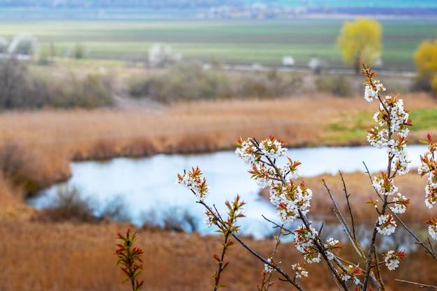 Kwitnąca gałąź drzewa na tle rzeki, która tworzy zygzak