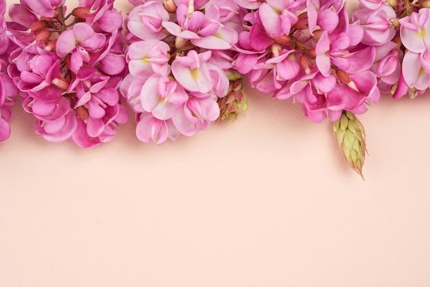 Kwitnąca gałąź robinia neomexicana z różowymi kwiatami na beżowej przestrzeni