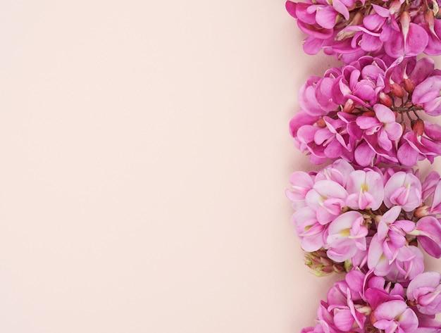 Kwitnąca gałąź robinia neomexicana z różowymi kwiatami na beżowym tle