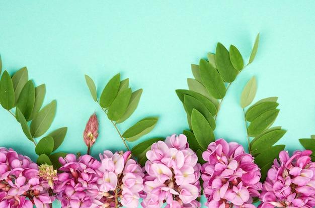 Kwitnąca gałąź robinia neomexicana z różowymi kwiatami, zielonym liściem