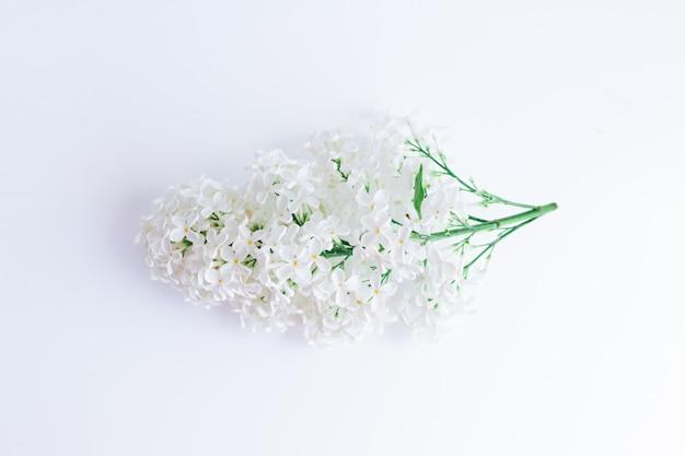 Kwitnąca gałąź z białymi kwiatami bzu na białym tle