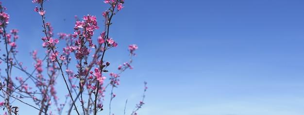 Kwitnąca gałąź z wiosennych kwiatów i błękitnego nieba