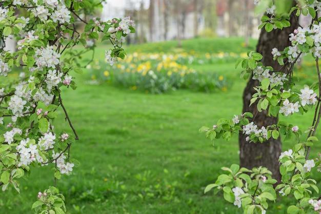 Kwitnąca jabłoń na zielono niewyraźne