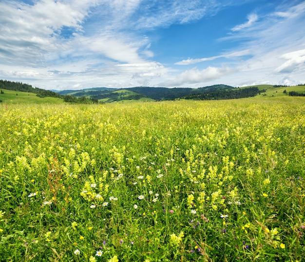 Kwitnąca polana na tle pasma górskiego. letni krajobraz w górach karpat.