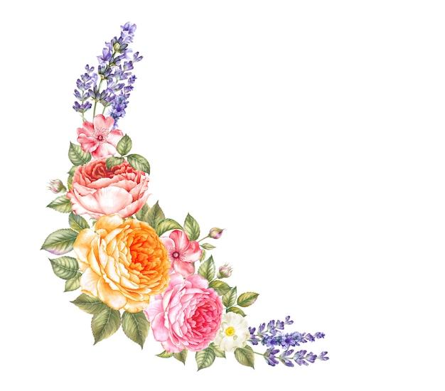 Kwitnąca róża akwarela ilustracja.