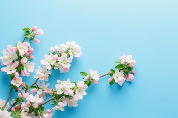 Kwitnąca wiosna sakura na błękicie