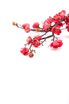 Kwitnąca wiśnia z jasnym różem