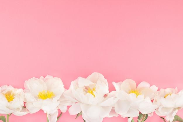 Kwitnące białe kwiaty piwonii