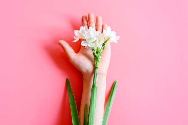 Kwitnące białe kwiaty żonkile na dłoni dziecka