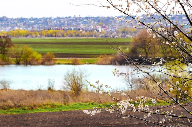 Kwitnące drzewo na tle rzeki przy słonecznej pogodzie