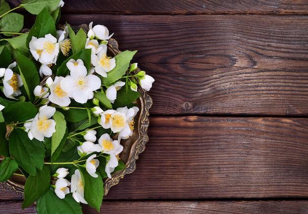 Kwitnące gałęzie jaśminu z białymi kwiatami