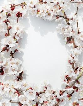 Kwitnące gałęzie owocowe kwiaty moreli na białym tle