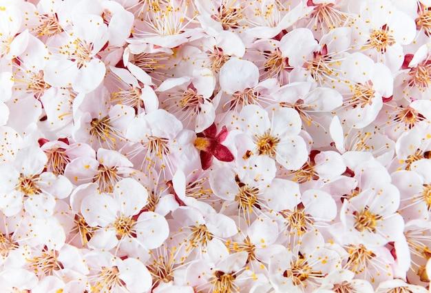Kwitnące Gałęzie Owocowe Premium Zdjęcia
