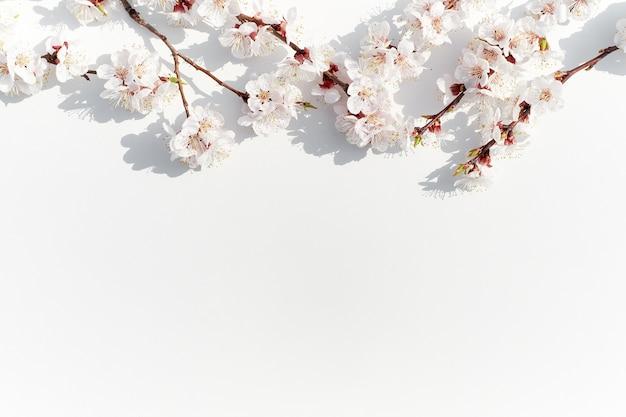 Kwitnące gałęzie owocowe